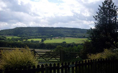 View from the garden looking towards Forge Valley Woods.